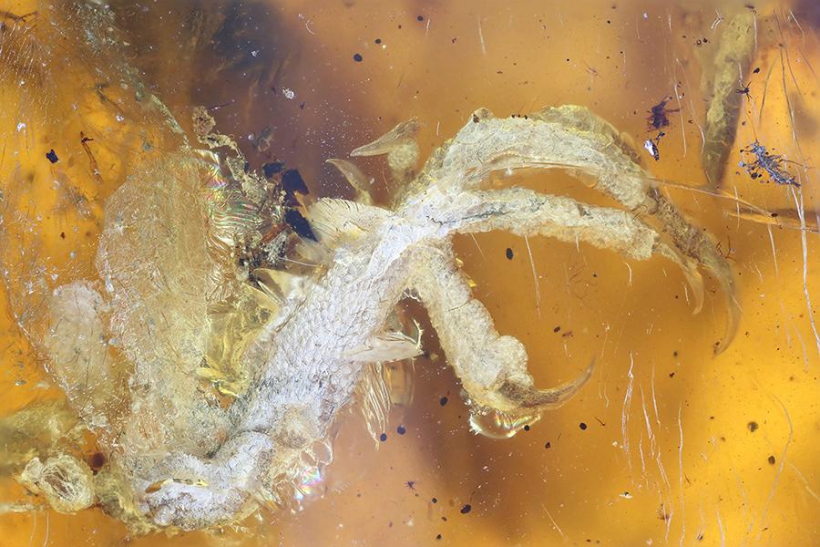 pássaro-de-100-milhões-de-anos