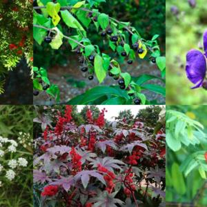 10 plantas venenosas que podem te matar!
