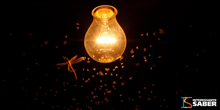 Por que vários insetos procuram a luz?