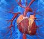10 fatos interessantes sobre o coração humano