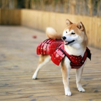 Empresa japonesa cria armaduras samurai para cães e gatos (1)