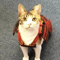 Empresa japonesa cria armaduras samurai para cães e gatos (2)