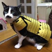 Empresa japonesa cria armaduras samurai para cães e gatos (4)