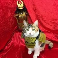 Empresa japonesa cria armaduras samurai para cães e gatos (6)