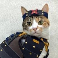 Empresa japonesa cria armaduras samurai para cães e gatos (7)