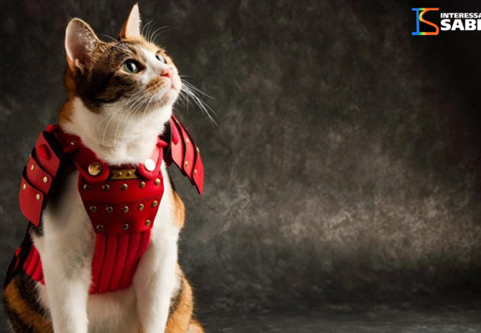 Empresa japonesa cria armaduras samurai para cães e gatos