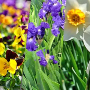 Decoração: 5 flores para colorir sua casa no inverno