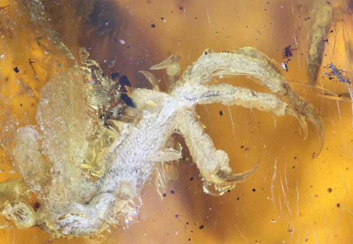 Pássaro de 100 milhões de anos é encontrado em bom estado