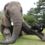 Amizades inusitadas entre animais e frases para inspirar o seu dia