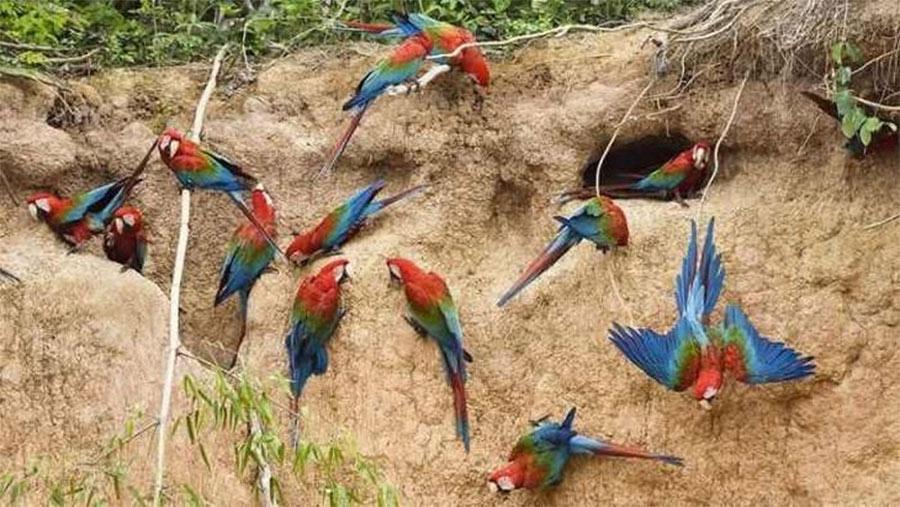 belezas-da-amazônia