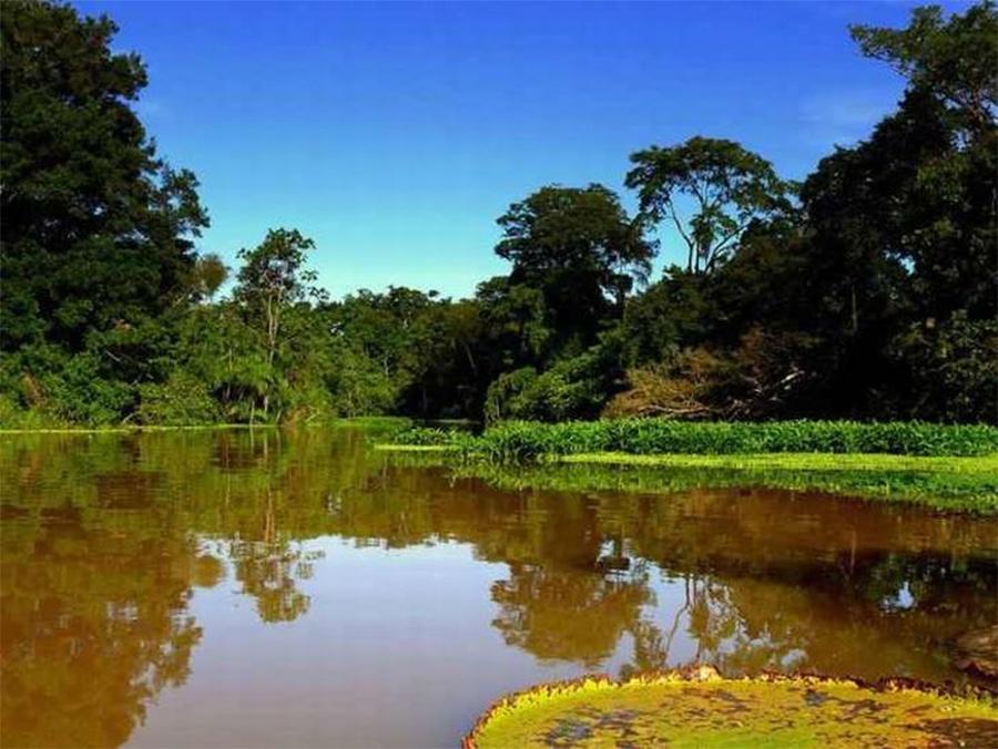 biodiversidade-amazônia