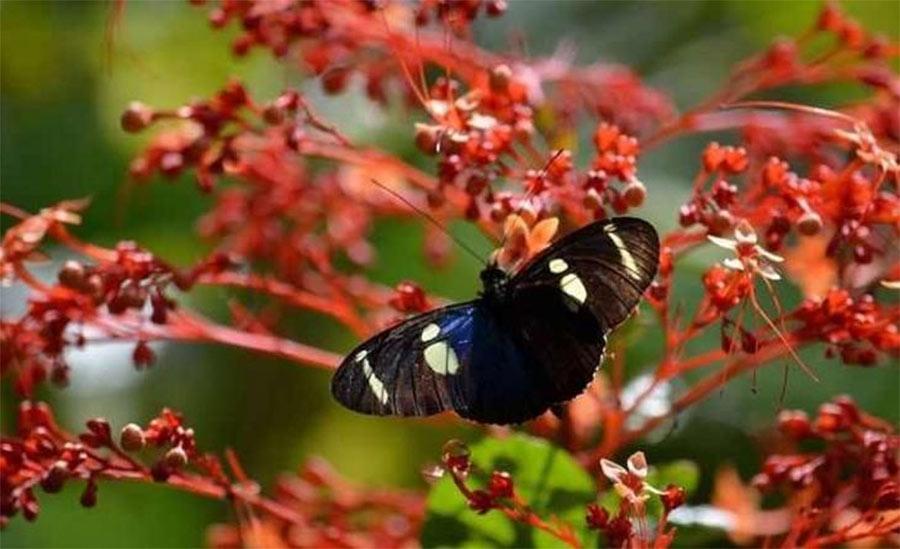 borboleta-flores