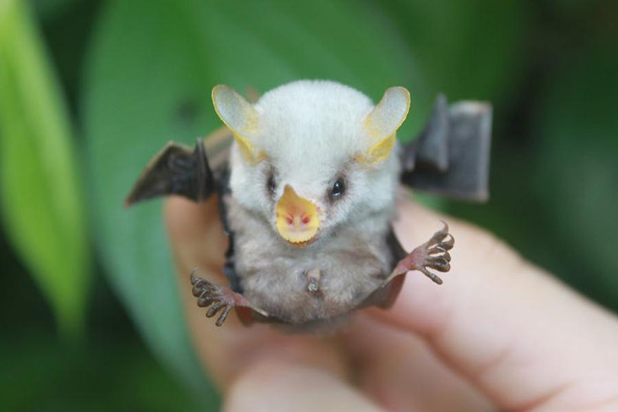 filhote-de-morcego