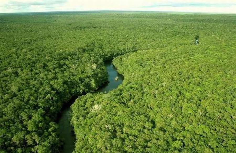floresta-amazônica-vista-de-cima