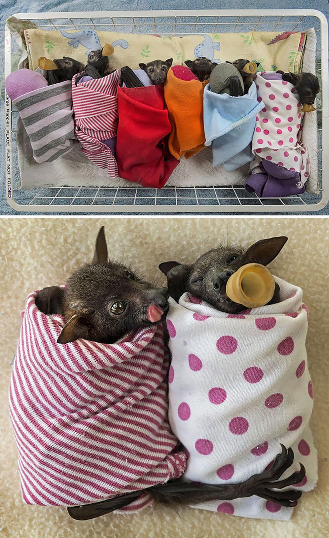 morcegos-fofinhos