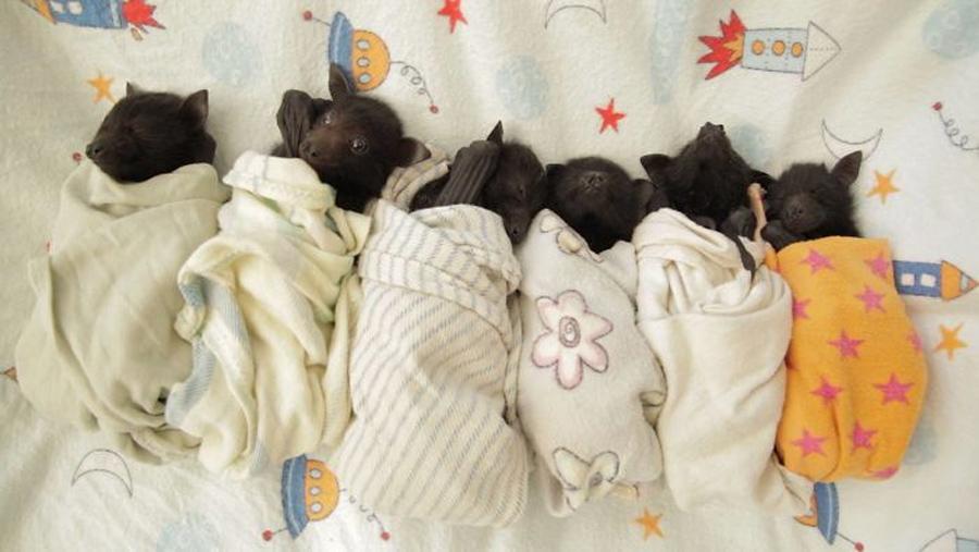 morcegos-fofos