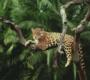 Conheça a Amazônia por dentro, com fotos e um vídeo impressionante