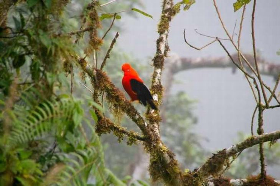 pássaro-na-Amazônia