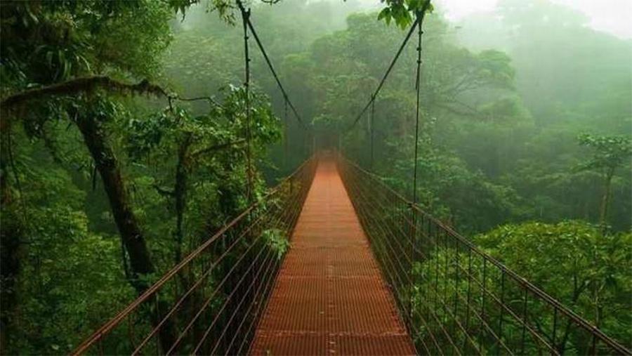 ponte-no-meio-da-floresta-amazônica