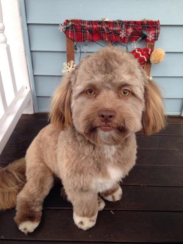 Esse cãozinho com rosto humano está dando o que falar