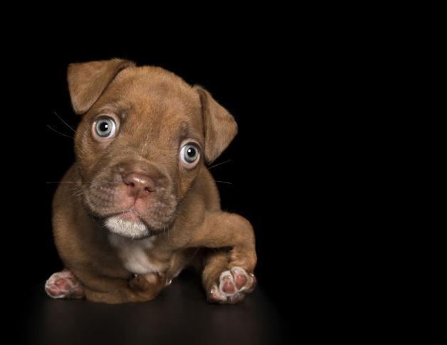 Projeto fotográfico mostra a fofura de cães com deficiência