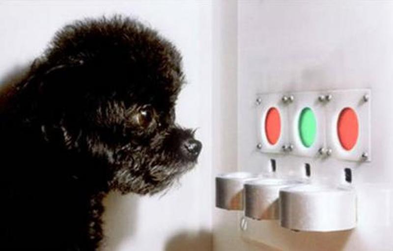 Quais cores os cães enxergam?