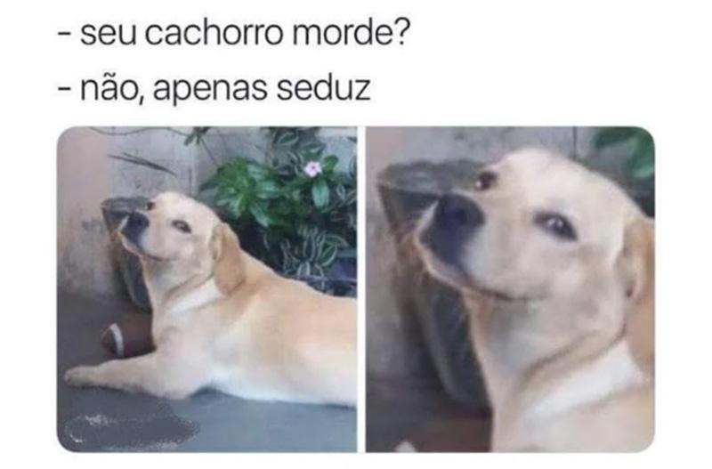 O cão que seduz