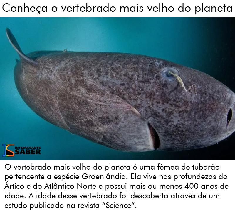 tubarão mais velho do mundo