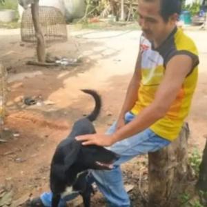Cão deficiente salva bebê enterrado vivo na Tailândia