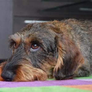 """Estudo mostra que olhar """"pidão"""" dos cães não é por acaso"""