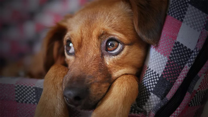 o olhar pidão dos cães