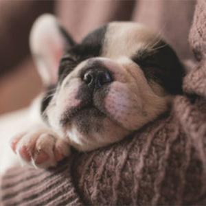 Tudo o que você precisa saber para ter e cuidar bem de um cachorro