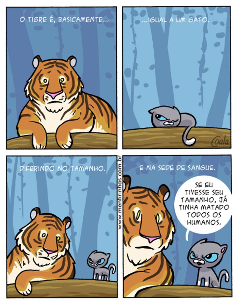 O tigre e o gato.