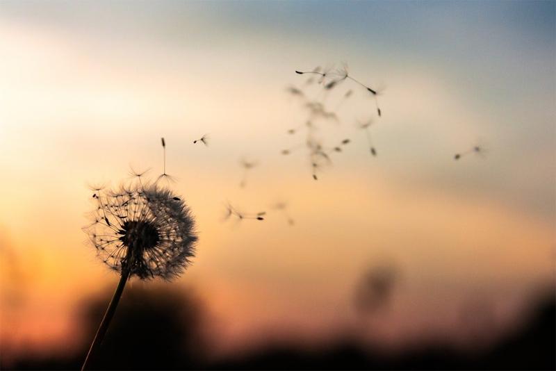 A prática saudável do desapego e algumas meditações para uma vida melhor
