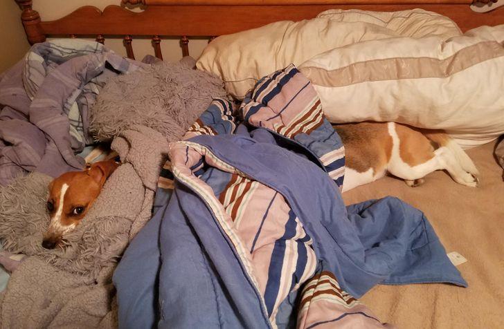 cachorro gigante deitado na cama